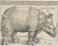 Dürer's Rhinoceros, 1515.png