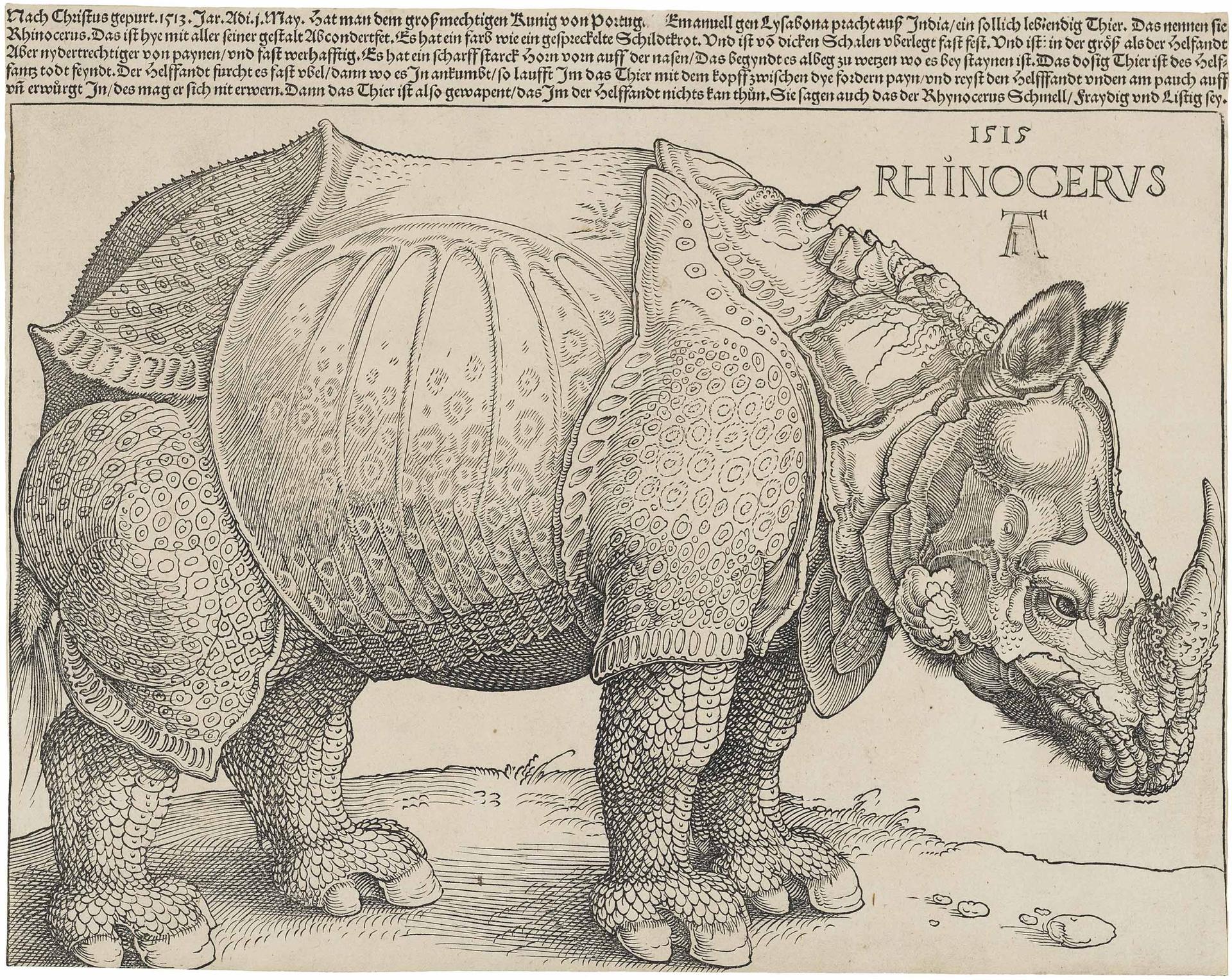 Dürer's rhino etching.