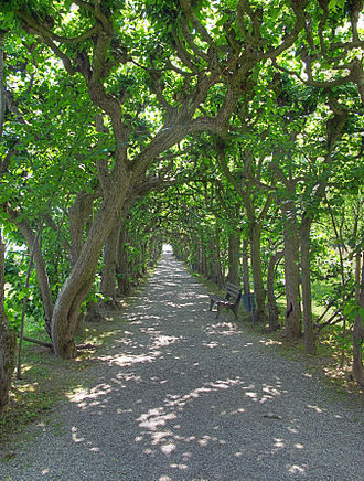 Dachau Palace - Lime trees in the court garden