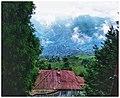 Darjeeling hills.jpg