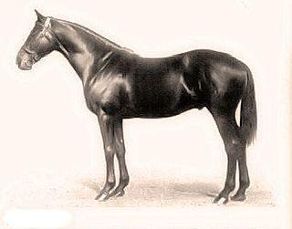 Dark Ronald British-bred Thoroughbred racehorse