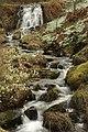 Dawyck Botanic Garden (3758018781).jpg