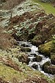 Dawyck Botanic Garden (3758813106).jpg