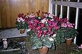 Dicksons Florist flower shop 07.jpg