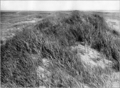 Die Niederelbe 1908 Abb. 124. In den Dünen von Trischen.png
