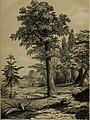 Die Pflanzendecke der Erde - populäre Darstellung der Pflanzengeographie für gebildete Naturfreunde (1859) (20316383114).jpg