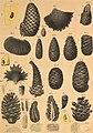 Die im Bernstein befindlichen organischen Reste der Vorwelt, gesammelt (1845) (20184565053).jpg