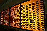 A display of some of the thousands of Dire Wolf skulls found in the La Brea tar pits