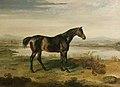 Doctor Syntax (horse).jpg