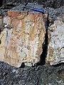Dolostone (Rockford Limestone, Lower Mississippian; Burkesville West Rt. 90 roadcut, Kentucky, USA) 5 (45898556084).jpg