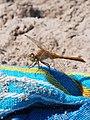Dragonfly 10.jpg