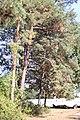 Drvece u parku (5).jpg