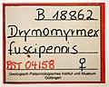 Drymomyrmex fuscipennis GZG-BST04158 specimen tag.jpg