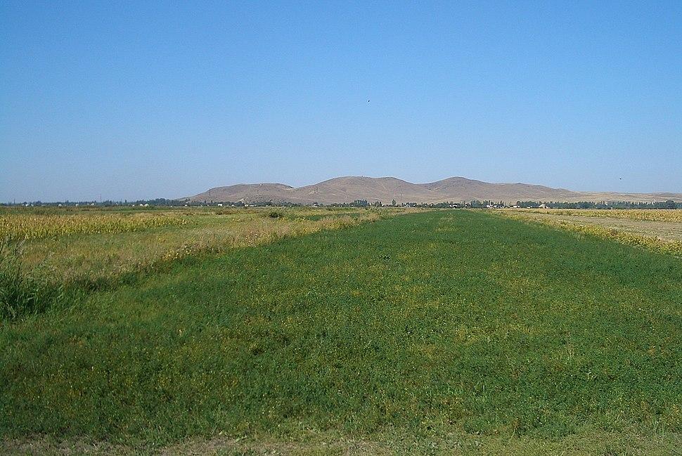 E7994-Milyanfan-fields