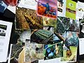 EOL Biodiversity University activities - Flickr - treegrow.jpg