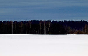 Flag of Estonia - An interpretation version for the tricolour: a forest in winter.