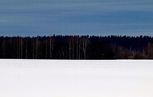 Flag of Estonia - An interpretation version for the tricolour: a forest in winter.