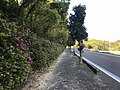 Ehime Prefectural Road No.21 on west side of Mimura Pass 2.jpg