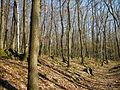 Eichenmischwald135.JPG
