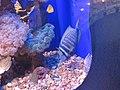 Eilat Coral World Underwater Observatory 06.jpg