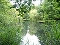 Eimsbütteler Park Am Weiher Bäume (4).jpg