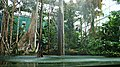 El bosque inundado amazonico-cosmocaixa-2009 (5).JPG