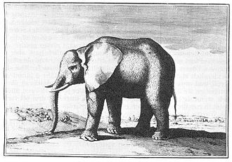 elefant ludwigs xiv wikipedia. Black Bedroom Furniture Sets. Home Design Ideas