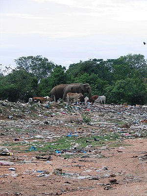 Environmental issues in Sri Lanka - Uncollected waste in Sri Lanka