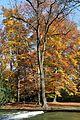 Englischer Garten Herbst-4.jpg