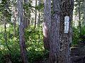 Entering Mount Rainier National Park - Flickr - brewbooks.jpg
