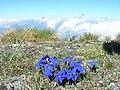 Enziane - panoramio.jpg