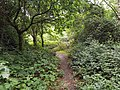 Epping Forest 20170727 112350 (49374893937).jpg