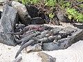 Espanola - Hood - Galapagos Islands - Ecuador (4870866751).jpg