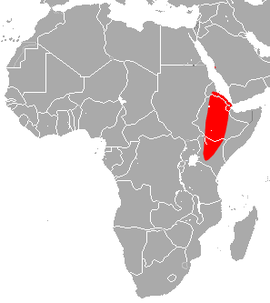 Ethiopian Large-eared Roundleaf Bat area.png