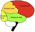 Exemple du split attention effect sur l'intégration texte-image.PNG