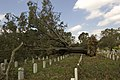FEMA - 39142 - Tree blown over in a cemetery in Louisiana.jpg