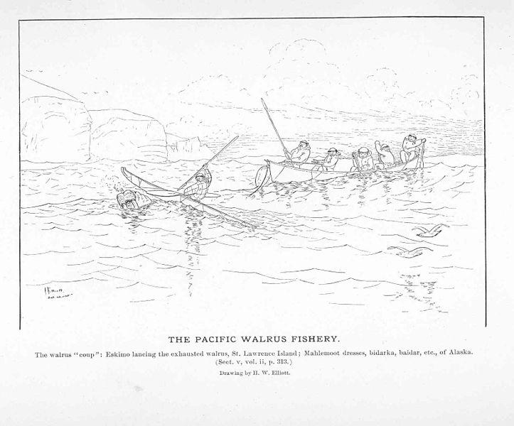 File:FMIB 50830 Pacific Walrus Fishery.jpeg