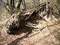 Fahrrad-ostern-2006-02.jpg