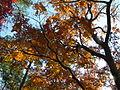 Fall (5249386128).jpg