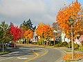 Fall Colors - panoramio (5).jpg