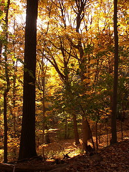 Fall leaves in Frick Park 02