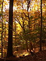 Fall leaves in Frick Park 02.jpg