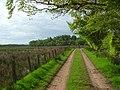 Farm track, Auchengyle - geograph.org.uk - 1322525.jpg