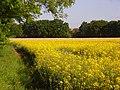 Farmland, Hurst - geograph.org.uk - 813761.jpg
