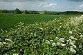 Farmland at Fownhope - geograph.org.uk - 1309298.jpg