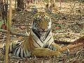 Fearless Tigress.jpg