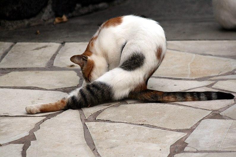 Feral cat 3.JPG