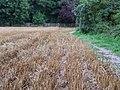 Field off Haymeads Lane - geograph.org.uk - 954888.jpg