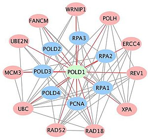 POLD1 - Image: Figure 3. A matrix of established and putative partners for POLD1 extracted from STRING