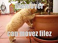Filemover lolcat.jpg